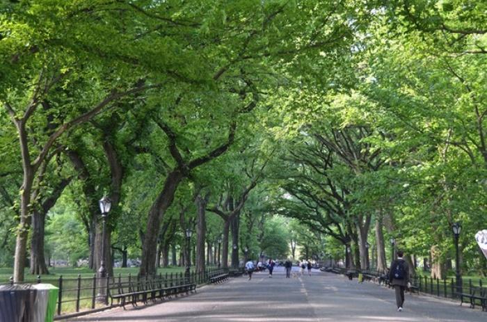 Công viên trung tâm Central Park, New York, Mỹ