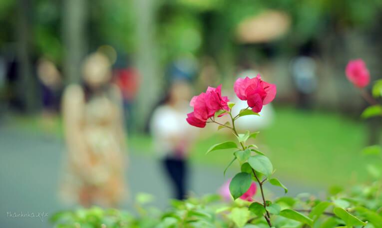 50 tên các loài hoa bằng tiếng Anh