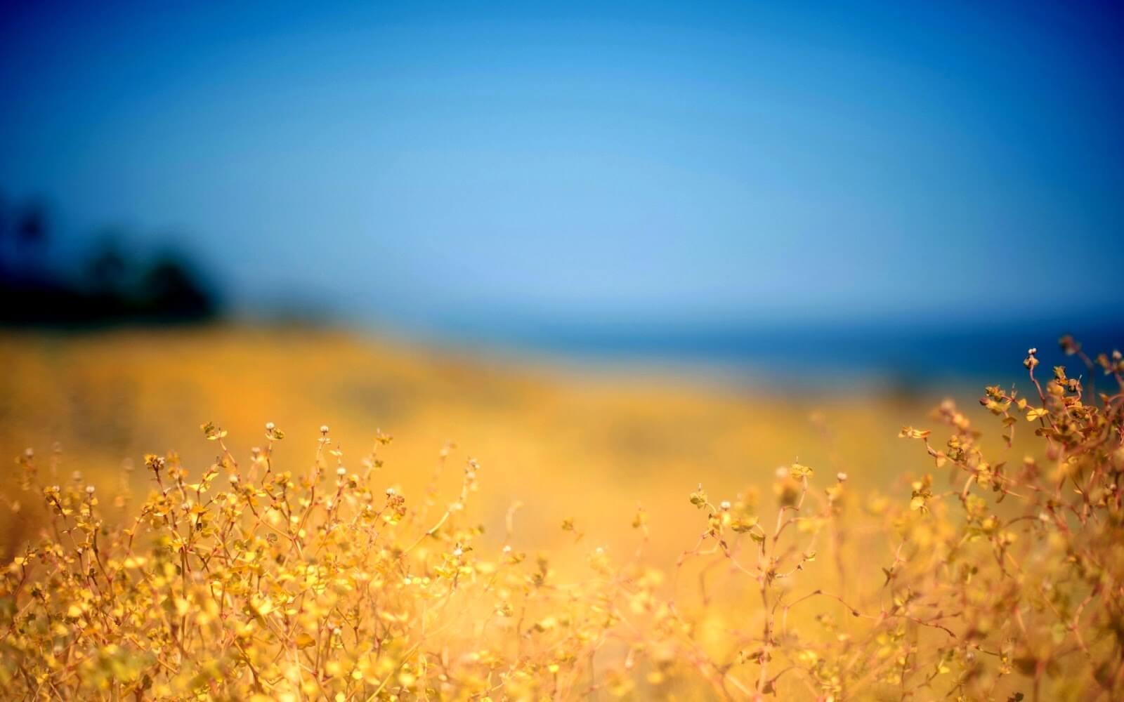 3 câu nói giúp lòng bạn thanh thản khi muộn phiền